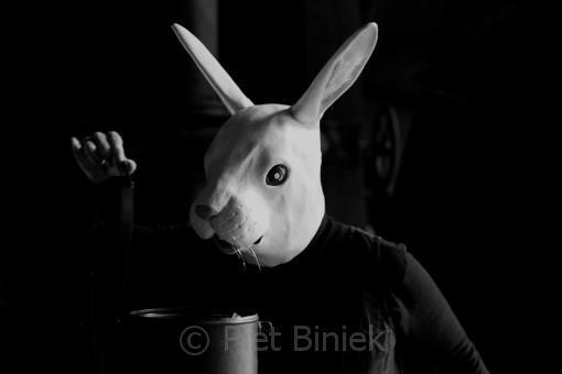 Never-trust-the-Rabbit